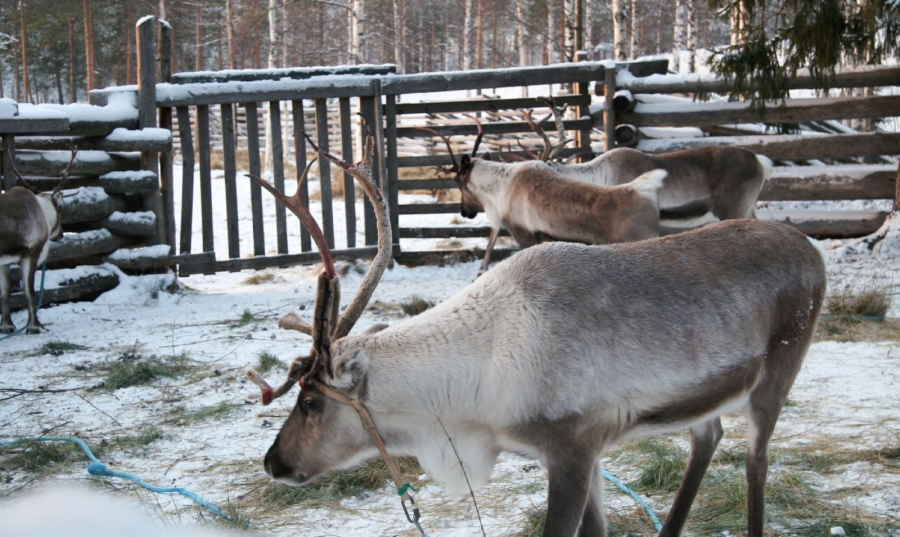 Lugares para viajar en Navidad. Destino Laponia