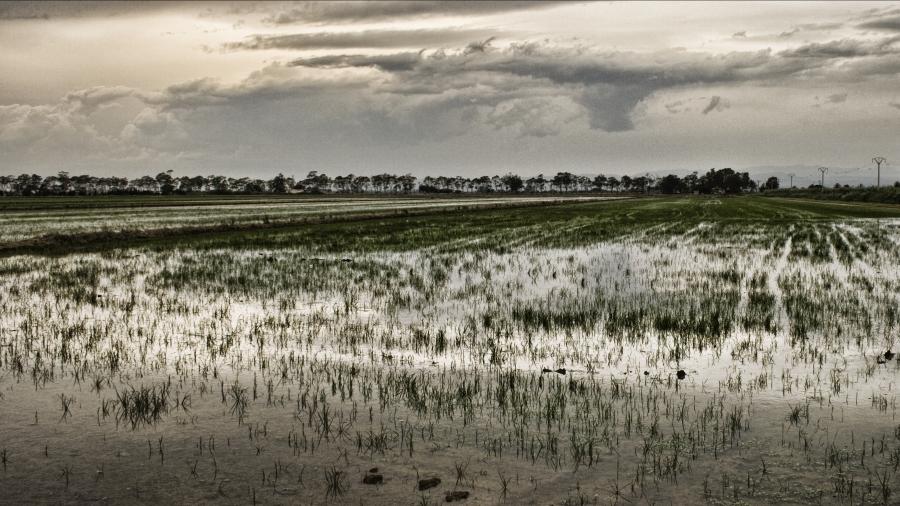 Visita al Delta del Ebro