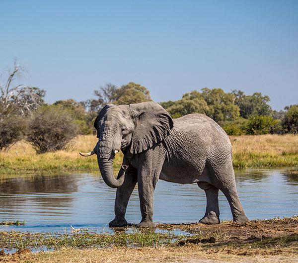 Botswana, recorriendo el norte
