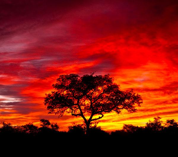 Viaje a Sudafrica